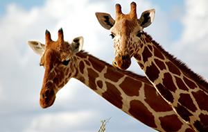 Bijzondere dieren in GaiaZOO Kerkrade