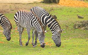 Ons 'eigen' Safaripark Beekse Bergen