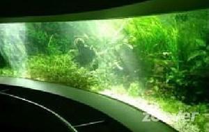 Aapjes kijken in de Aquazoo