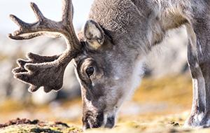 Lapland nader toegelicht