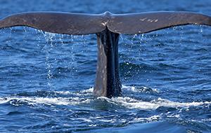 Op walvissafari in Noorwegen