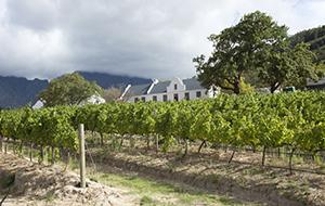 Aan de wijn in Franschhoek