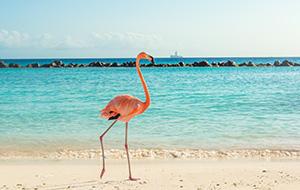 Flamingo's en spierwitte stranden