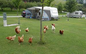 Camping Paradise Garden in Oostenrijk