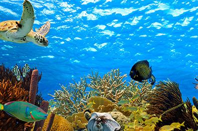 Top 3 zeker doen op Bonaire