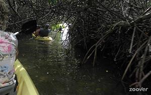 Op avontuur met Mangrove Information Kayak & Snorkel Center