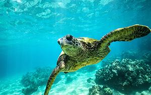 Ontmoet schildpadden