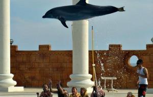 Zwemmen met dolfijnen in Sealanya