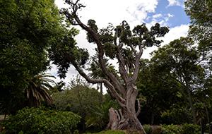 Bezoek het Jardim António Borges