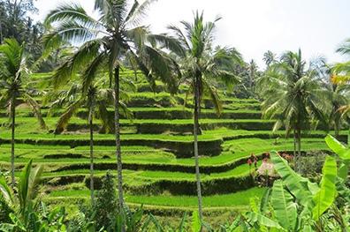 Highlights van Bali