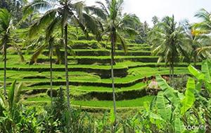 Tegallantang Rice Terrace
