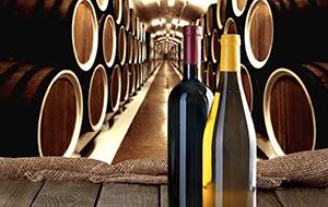 De wijngaarden van Benidorm