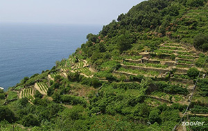 Wandel door Nationaal Park Cinque Terre