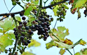 3.Wijn proeven in Cheverny