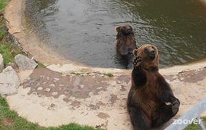Dieren én attracties in Wild und Freizeitpark