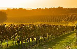 Fietsen door de wijnvelden van Aquitaine