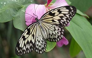 Wandel door De Orchideeën Hoeve