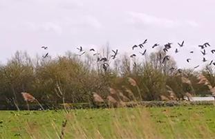 Video over Flevoland