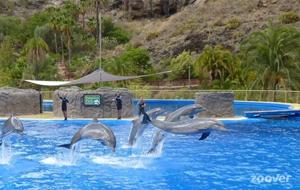 Zwemmen met dolfijnen in Palmitos Park