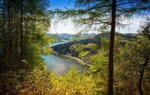 De bossen van natuurpark Diemelsee