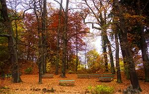 Geschiedenisles in natuurpark Habichtswald