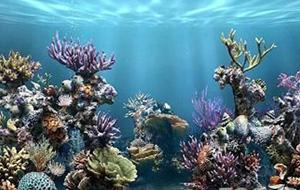 Bezoek The Aquarium Reef