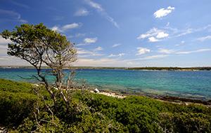 De groene Brijuni Islands