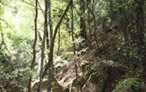 Ontdek de vlindervallei De Petaloúdos