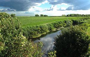 De moerassen van Natuurpark Kopački