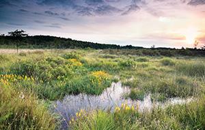 Ontdek de natuur in nationaal park Hoge Kempen