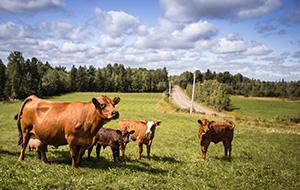 4.Duizend koeien in Millevaches