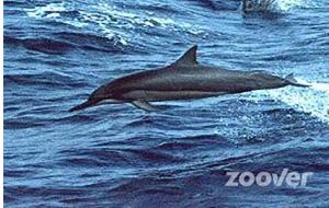 Dol fijn: zwemmen met dolfijnen