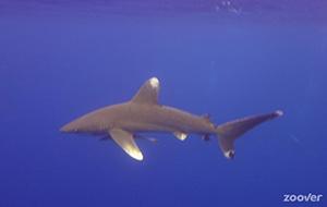 De ultieme duikstek: Elphinstone
