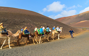 Ga op kameelsafari!