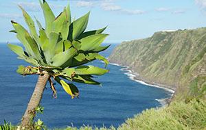 Indrukwekkende natuur op de Azoren