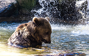 Diertjes kijken: Parc Animalier Pyrenees