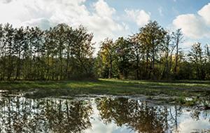 Natuur, geschiedenis en steden in Gelderland