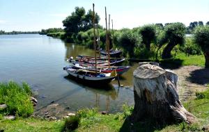 Ontdek de natuur in de Biesbosch vanaf het water