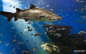 Visjes kijken bij Palma Aquarium