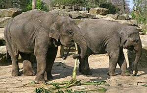 5. Een dagje dieren spotten in Dierenpark Amersfoort
