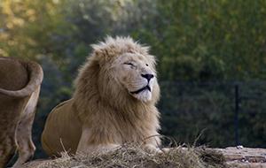 Op safari in Parco Natura Viva