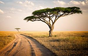 Afrika, continent met vele gezichten