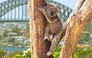 Avontuurlijk Australië