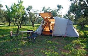 Camping Piazza Azzurra, tussen de olijfbomen