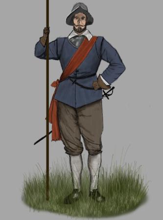 Испанский пикинёр, рисунок