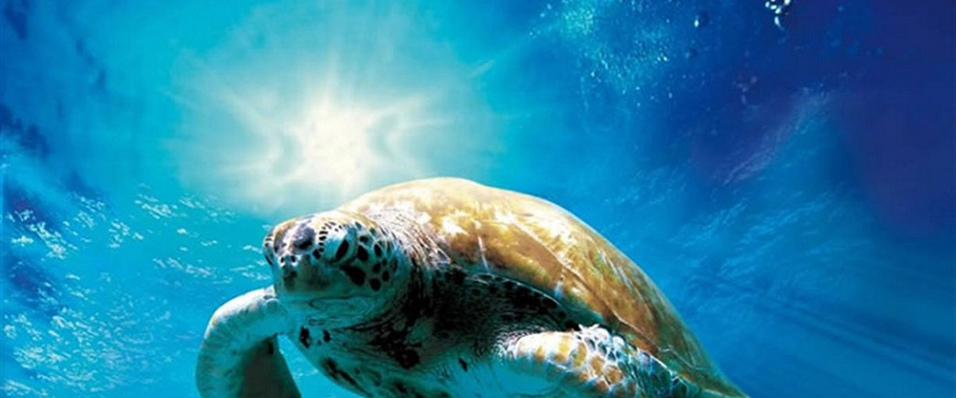 Turtles: The Incredible Journey