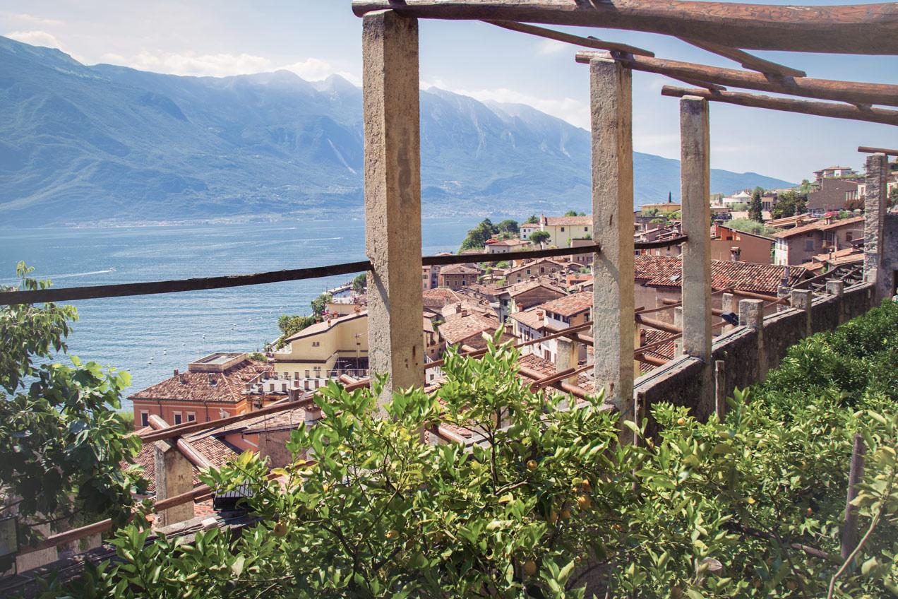 Ausblick über Limone Sul Garda, im Vordergrund sind kleine Zitronenbäume zu sehen.