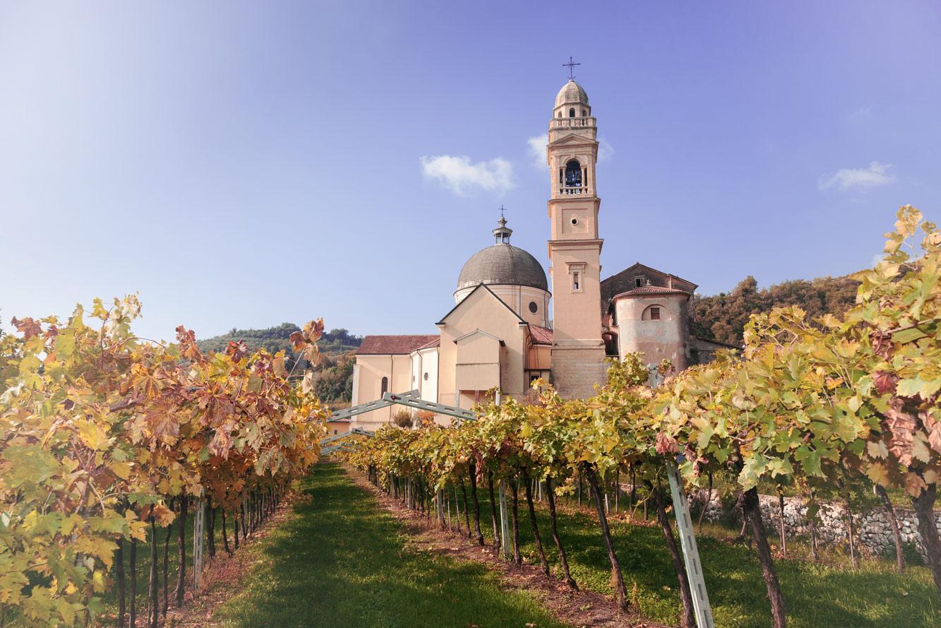 Weinstöcke und eine Kirche in Valpolicella.