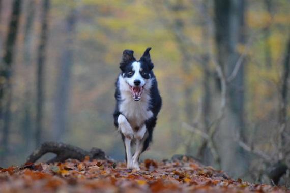 Hund im Schwarzwald3