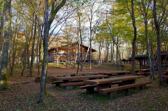 Waldlichtung Campingplatz BAunschweig